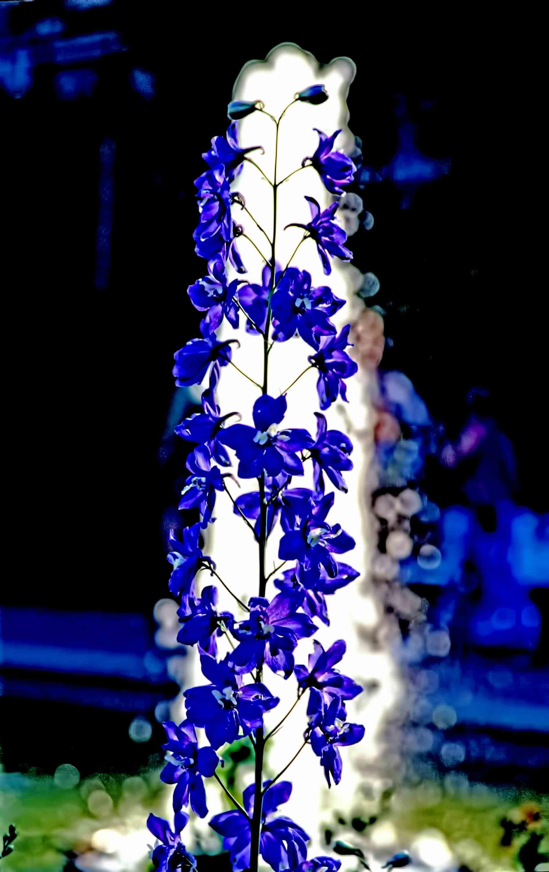 פרחים על רקע מזרקה בעיר ויסבדן